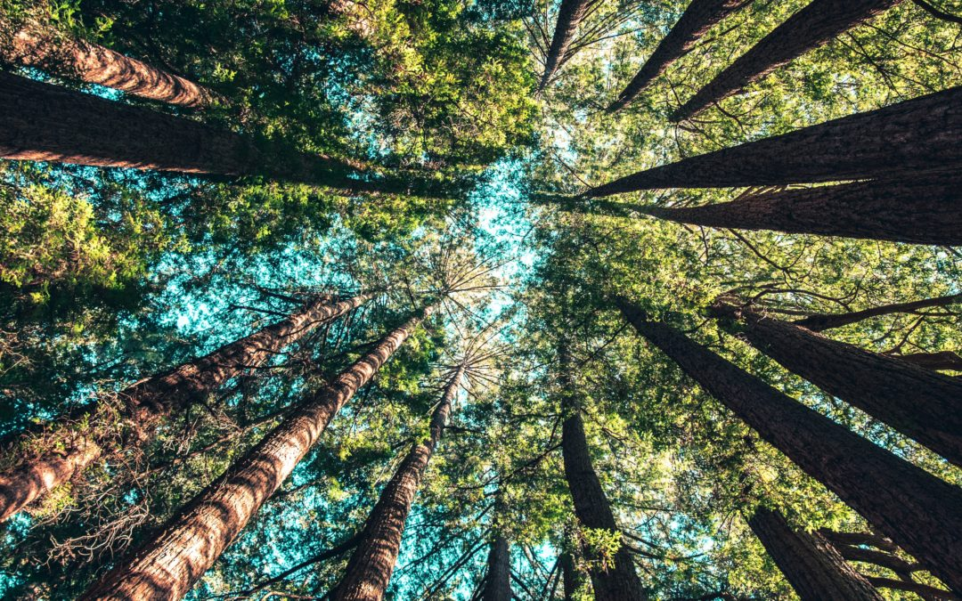 Sztuka i teoria kąpieli leśnych
